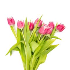 Bunch of pink tulips- Stock Photo or Stock Video of rcfotostock | RC-Photo-Stock