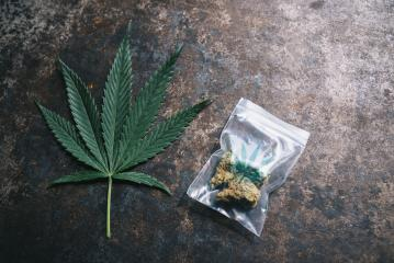 Cannabis buds in a plastic bag with Hanf sign and Hemp leaf. Concept of herbal alternative medicine, cbd oil, pharmaceutical industry or illegal drug use- Stock Photo or Stock Video of rcfotostock | RC-Photo-Stock