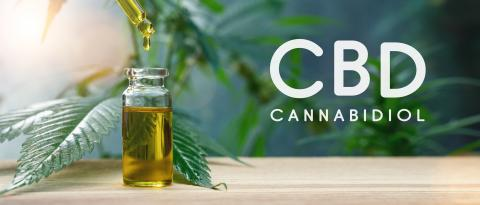 Cannabis CBD oil extracts in jars herb and leaves. Concept medical marijuana : Stock Photo or Stock Video Download rcfotostock photos, images and assets rcfotostock   RC-Photo-Stock.: