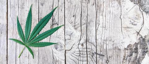 cannabis leaf on old wooden table, banner size, copyspace for your individual text.- Stock Photo or Stock Video of rcfotostock | RC-Photo-Stock