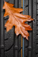 Car tire profile with autumn leaf an rain drops : Stock Photo or Stock Video Download rcfotostock photos, images and assets rcfotostock | RC-Photo-Stock.: