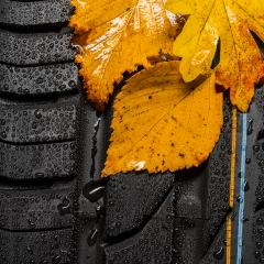 car tire profile with autumn leaves and raindrops : Stock Photo or Stock Video Download rcfotostock photos, images and assets rcfotostock | RC-Photo-Stock.: