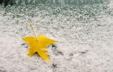 Car window with snow covered and autumn maple leaf- Stock Photo or Stock Video of rcfotostock | RC-Photo-Stock