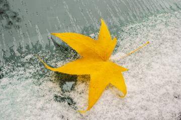 Car windshield with snow covered and autumn maple leaf- Stock Photo or Stock Video of rcfotostock | RC-Photo-Stock
