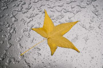 Car with melted snow and autumn maple leaf- Stock Photo or Stock Video of rcfotostock | RC-Photo-Stock