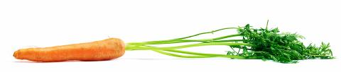 Carrot raw vegetables on white- Stock Photo or Stock Video of rcfotostock | RC-Photo-Stock