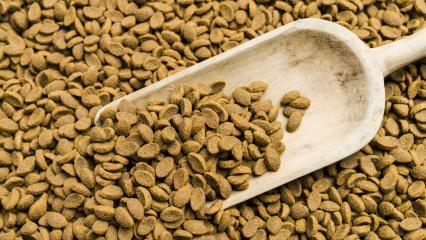 Cat food with shovel background- Stock Photo or Stock Video of rcfotostock | RC-Photo-Stock