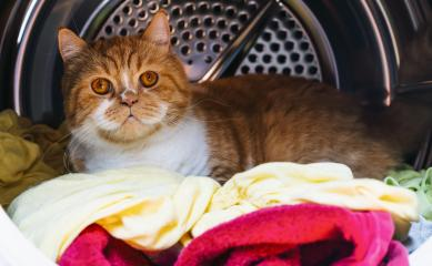Cat in the washing machine : Stock Photo or Stock Video Download rcfotostock photos, images and assets rcfotostock | RC-Photo-Stock.: