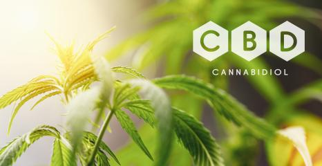 CBD cannabis flower and marijuana plant : Stock Photo or Stock Video Download rcfotostock photos, images and assets rcfotostock | RC-Photo-Stock.: