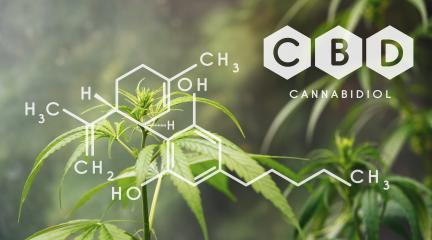 CBD Chemical Formula, Beautiful background of green cannabis flowers A place for copy space : Stock Photo or Stock Video Download rcfotostock photos, images and assets rcfotostock | RC-Photo-Stock.: