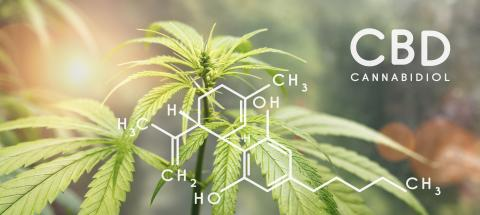 Cbd formula. Cannabidiol molecule structure compound with plant. Medical marijuana molecules, cannabidiol biochemistry formula. Chemistry addiction- Stock Photo or Stock Video of rcfotostock | RC-Photo-Stock