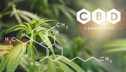 CBD Structural Formula, Cannabis Industry, Growing Marijuana, Pharmacy Business, CBD Elements and THC in Marijuana, Marijuana and Medical Marijuana Health- Stock Photo or Stock Video of rcfotostock | RC-Photo-Stock