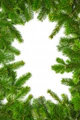 christmas fir branches background- Stock Photo or Stock Video of rcfotostock | RC-Photo-Stock