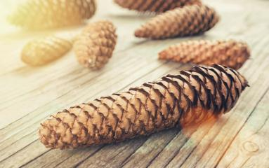christmas table with Pine cones : Stock Photo or Stock Video Download rcfotostock photos, images and assets rcfotostock | RC-Photo-Stock.: