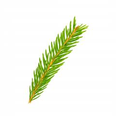 christmas tree branch- Stock Photo or Stock Video of rcfotostock | RC-Photo-Stock