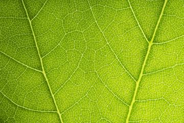 Close up on green leaf texture- Stock Photo or Stock Video of rcfotostock | RC-Photo-Stock