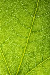 Close up on green leaf texture : Stock Photo or Stock Video Download rcfotostock photos, images and assets rcfotostock | RC-Photo-Stock.: