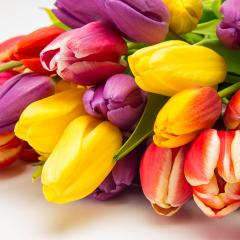 closeup from tulip flowers- Stock Photo or Stock Video of rcfotostock | RC-Photo-Stock