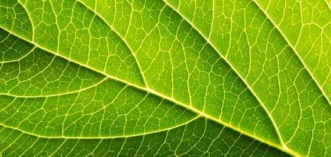 Close-Up of Leaf- Stock Photo or Stock Video of rcfotostock | RC-Photo-Stock