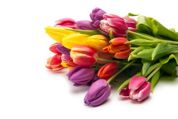 colorful bouquet of tulip flowers : Stock Photo or Stock Video Download rcfotostock photos, images and assets rcfotostock | RC-Photo-Stock.: