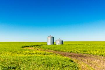 Corn Field twister silos in canada alberta at summer- Stock Photo or Stock Video of rcfotostock | RC-Photo-Stock