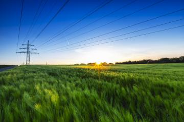 cornfield before sunset at dusk with power pole- Stock Photo or Stock Video of rcfotostock | RC-Photo-Stock