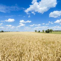 Cornfield in summer with blue cloudy sky and windpower park at t : Stock Photo or Stock Video Download rcfotostock photos, images and assets rcfotostock | RC-Photo-Stock.:
