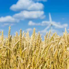 Cornfield in summer with cloudy bleu sky and wind power in the b : Stock Photo or Stock Video Download rcfotostock photos, images and assets rcfotostock | RC-Photo-Stock.: