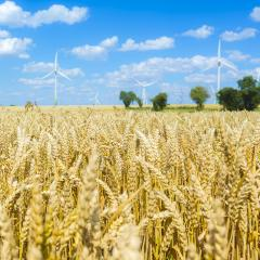 Cornfield with cloudy blue sky an trees and a Pinwheel park in t : Stock Photo or Stock Video Download rcfotostock photos, images and assets rcfotostock | RC-Photo-Stock.: