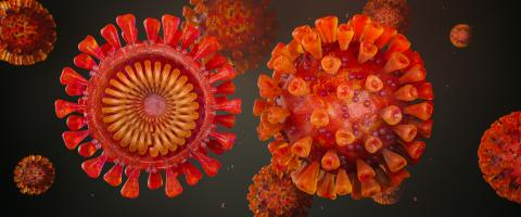 Corona virus and Cross-section header with Sars-CoV-2 virus as realistic - 3D rendering- Stock Photo or Stock Video of rcfotostock | RC-Photo-Stock