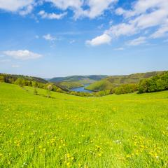 dandelion meadow in the eifel landscape at sping, germany : Stock Photo or Stock Video Download rcfotostock photos, images and assets rcfotostock | RC-Photo-Stock.: