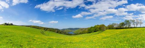 dandelion meadow in the eifel landscape with Lake Rursee at sping, panorama, germany : Stock Photo or Stock Video Download rcfotostock photos, images and assets rcfotostock | RC-Photo-Stock.: