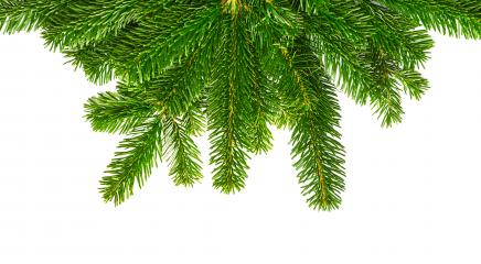 decoration fir branches- Stock Photo or Stock Video of rcfotostock | RC-Photo-Stock