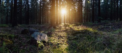 deep forest panroama : Stock Photo or Stock Video Download rcfotostock photos, images and assets rcfotostock | RC-Photo-Stock.: