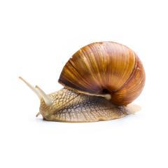 depressive snail- Stock Photo or Stock Video of rcfotostock | RC-Photo-Stock