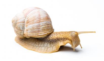 depressive snail- Stock Photo or Stock Video of rcfotostock | RC-Photo-Stock