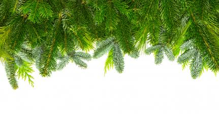 different fir branches mix- Stock Photo or Stock Video of rcfotostock | RC-Photo-Stock