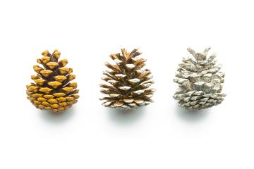 different pine cones on white : Stock Photo or Stock Video Download rcfotostock photos, images and assets rcfotostock | RC-Photo-Stock.: