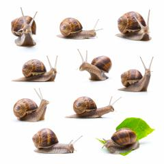 different snails set : Stock Photo or Stock Video Download rcfotostock photos, images and assets rcfotostock | RC-Photo-Stock.: