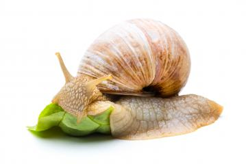 eating snail- Stock Photo or Stock Video of rcfotostock | RC-Photo-Stock
