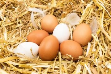 eggs lie on straw- Stock Photo or Stock Video of rcfotostock | RC-Photo-Stock