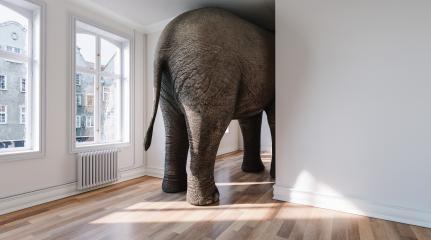 Elefant in Wohnung als Platzmangel und Haustier Konzept : Stock Photo or Stock Video Download rcfotostock photos, images and assets rcfotostock | RC-Photo-Stock.:
