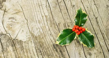 European Holly (Ilex aquifolium), christmas decoration, on wooden table- Stock Photo or Stock Video of rcfotostock | RC-Photo-Stock