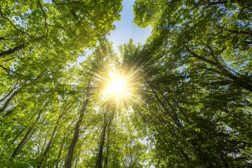 Evening sun shining explosive through treetop in a spring forest : Stock Photo or Stock Video Download rcfotostock photos, images and assets rcfotostock | RC-Photo-Stock.: