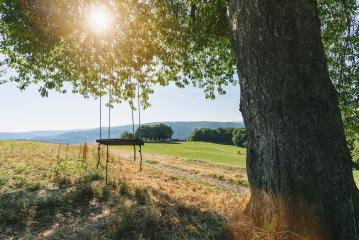 fantastic big tree with swing on green field at summer : Stock Photo or Stock Video Download rcfotostock photos, images and assets rcfotostock | RC-Photo-Stock.: