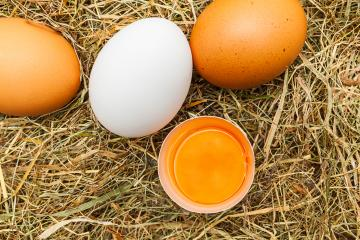 Farm eggs : Stock Photo or Stock Video Download rcfotostock photos, images and assets rcfotostock | RC-Photo-Stock.: