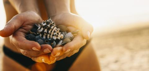 Female hands holding a shells on Tropical Beach with sand at sunset : Stock Photo or Stock Video Download rcfotostock photos, images and assets rcfotostock | RC-Photo-Stock.: