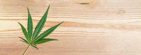 female Marijuana leaf on wooden background. banner size, copyspace for your individual text.- Stock Photo or Stock Video of rcfotostock | RC-Photo-Stock