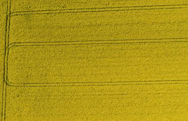 field of rapeseed from above. drone shot- Stock Photo or Stock Video of rcfotostock | RC-Photo-Stock