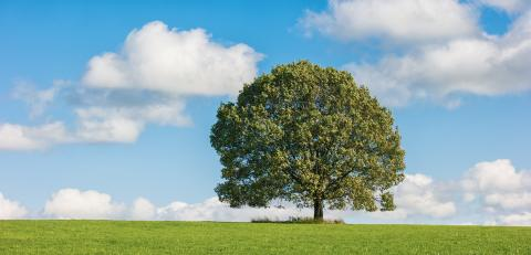 Field with tree and cloudy sky- Stock Photo or Stock Video of rcfotostock | RC-Photo-Stock